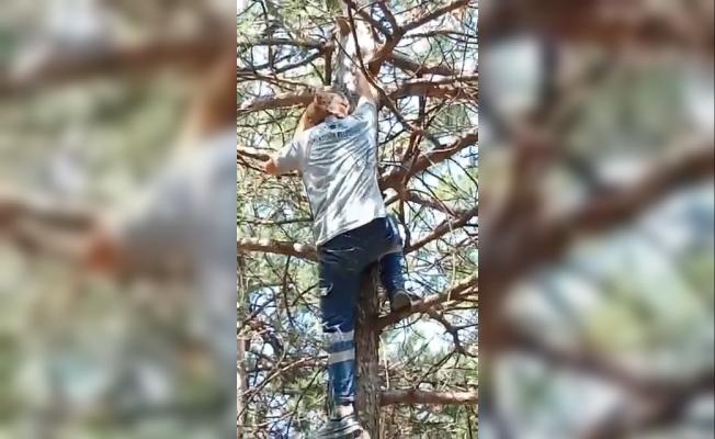 Ağaçta mahsur kalan kedi ekiplerin omzunda aşağı indi