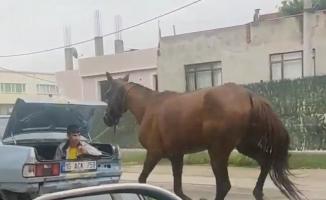 Bursa'da aracın arkasına at bağlayıp koşturan şahsa ağır ceza