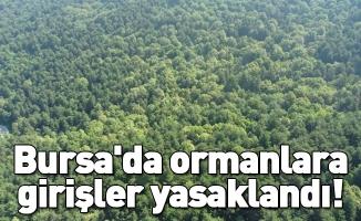 Bursa'da ormanlara girişler yasaklandı!
