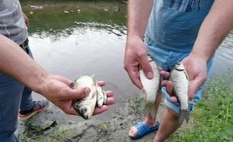 İnegöl'de derede toplu balık ölümü