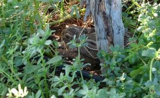 Köylüyle yaban tavşanının sevimli dostluğu