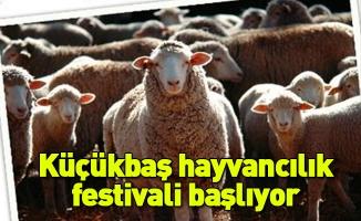 Küçükbaş hayvancılık festivali başlıyor