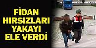 Fidan Hırsızları Yakayı Ele Verdi