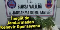 İnegöl'de Jandarmadan Kenevir Operasyonu