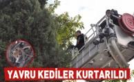 Okulun Bahçesindeki Ağaçta Mahsur Kalan 3 Yavru Kedi Kurtarıldı