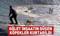 Gölet inşaatın düşen köpekler kurtarıldı