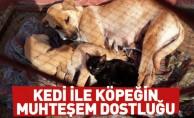 Kedi İle Köpeğin Dostluğu İlgi Çekti