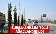 Bursa-Ankara Yolu Ağaçlandırıldı