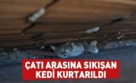 Çatı Arasına Sıkışan Kedi Kurtarıldı