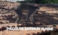 İnegöl#039;de maymun alarmı
