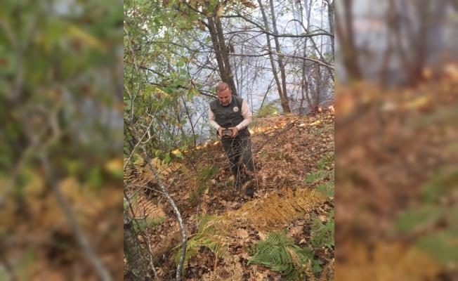 Yanan ormanda kaplumbağayı ormancı kurtardı