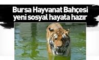 Bursa Hayvanat Bahçesi yeni sosyal hayata hazır