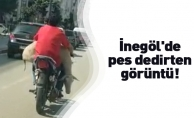 Motosiklet ile küçükbaş hayvan taşıdı