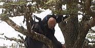 Alman turist ağaçta asılı kaldı !