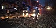 İstanbul'da lodos ağaç devildi