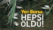 Bursa'da 20 yıl sonra ilk kez balık üreyen deredeki tüm balıkları öldürdüler
