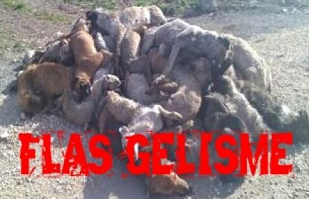 Yenişehir'de ki Köpek Katliamında Flaş Gelişme
