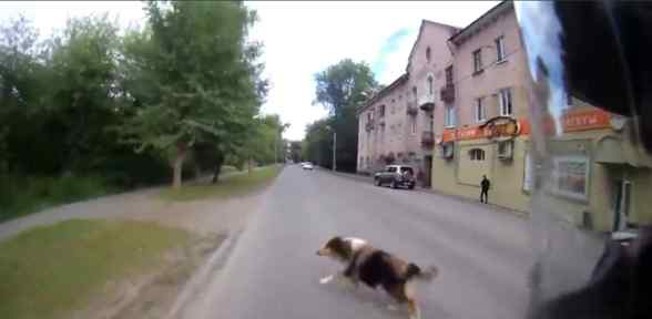 Yola çıkan Köpek Sonu Oluyordu